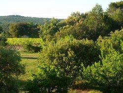 Vineyard nearby