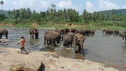 Elephant orphanage Kandy