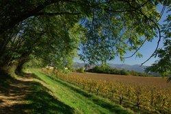 Strada del Vino Franciacorta (Franciacorta wine route)