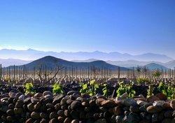 Bodega Wine Tours