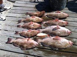 Reel-Ality Sportfishing Charters