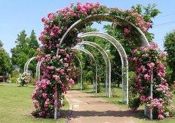 東松戸ゆいの花公園