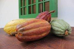 Aromas de Cacao