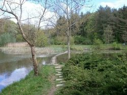 Forest Park Lipnik