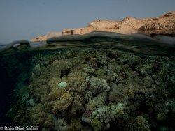 Rocky Island, Egypt