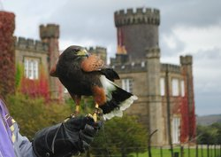 Swinton Park Birds of Prey
