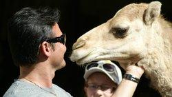 Camel Safari Gran Canaria