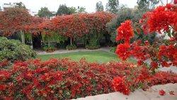garden (101235952)