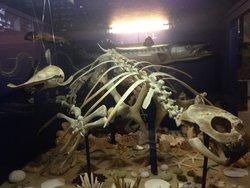 Dinosaurland Fossil Museum