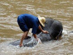 Maetaeng Elephant Park