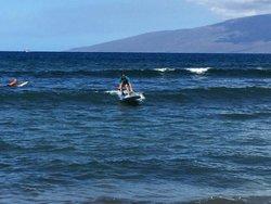 Surf Dog Maui