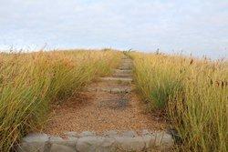 Bluff Point Walking Track
