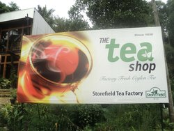 Store  Field Tea Factory Tea Center