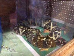 Joao Moojen Zoology Museum