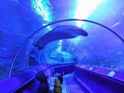 西オーストラリア水族館 - AQWA