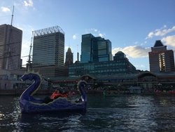 Inner Harbor Paddle Boats
