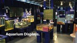 Discovery Passage Aquarium
