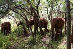 The Elephant Orphanage Project
