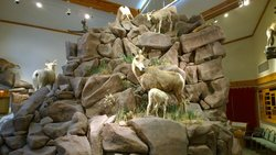 National Bighorn Sheep Interpretive Center