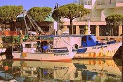 Mercato ittico comunale
