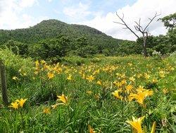 Numappara Marshland