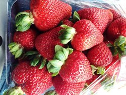 Portland Strawberries