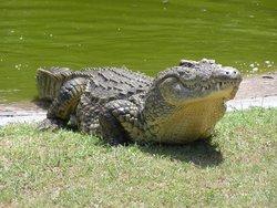 Zulu Croc Reptile Park