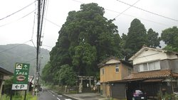 Hutan pohon cedar Kayano