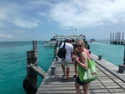 Quick trip to Playa Tortuga to swim with the dolphins!