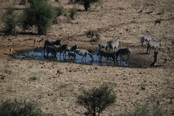 More animals at the watering hole