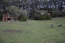 view of cottage with kangaroos