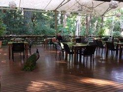 The Restaurant at Cedar Park