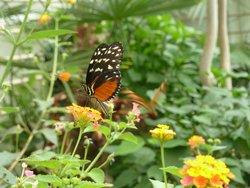 Bornholms Sommerfuglepark & Tropeland