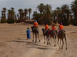 Desert passions -  Day Tours
