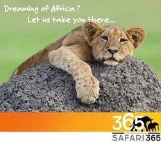 Safari 365 - Day Adventures