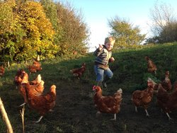 The happy free range hens from Wensleydale Eggs we use for our award winning breakfast