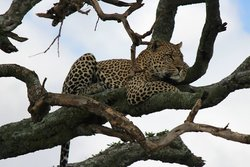 Bountiful Safaris - Day Tours
