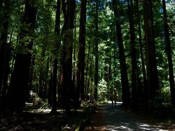Armstrong Redwood State Reserve