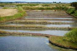 Balade en Caleche Dans Les Marais Salants de Guerande