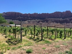 vines and view