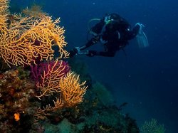 Diving Pelion