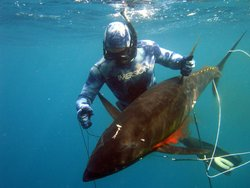 Puerto Rico Freedivers and Spearfishing Charters