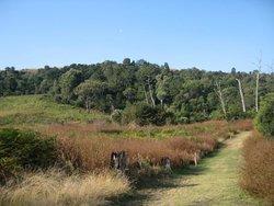 Marutswa Forest Trail and Boardwalk
