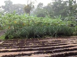 Cultour Costa Rica
