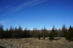 Hallormsstadur Forestry Reserve