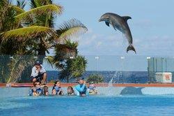 Dolphin Discovery Tulum - Akumal