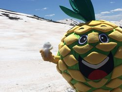 Snowy Pineapple