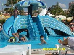 Aqua Club Dolphin