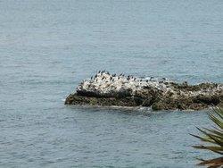 От ресторана открывается вид на остров пеликанов