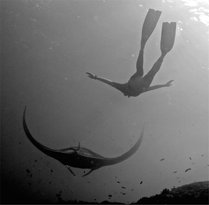 Fusion Freediving